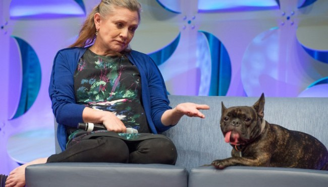 Кэрри Фишер завела инстаграм для своего пса